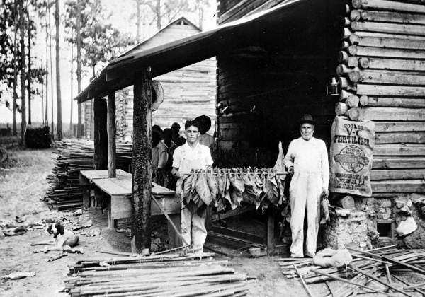First Tobacco Farms in Florida